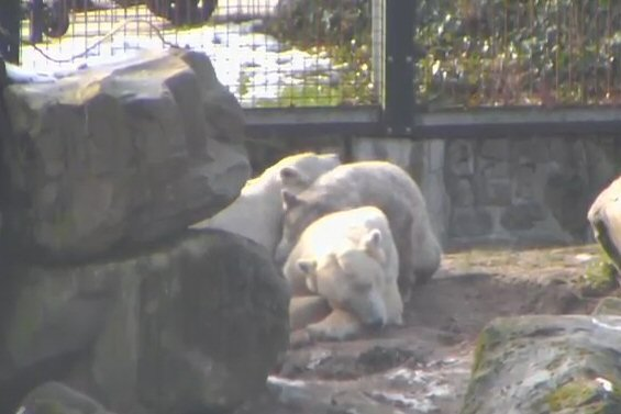 Zoo Rhenen 41a