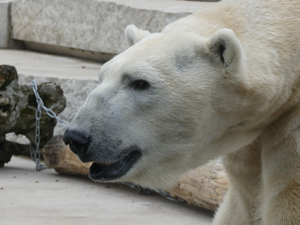 Ältere Eisbärblogs